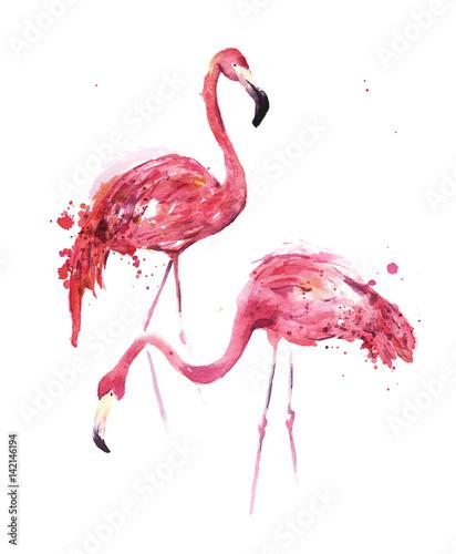 Akwarela, flamingi