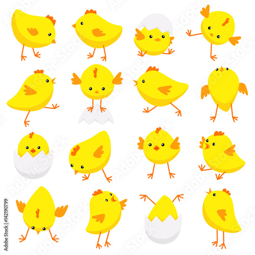 Valokuva Eastern chicks in various poses isolated on white background