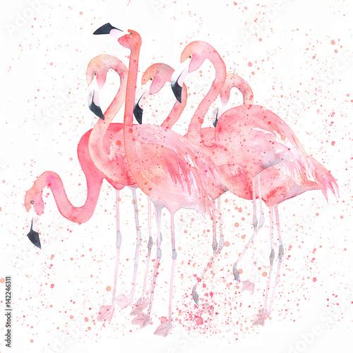 Akwarele flamingi z odrobiną. Malowanie obrazu