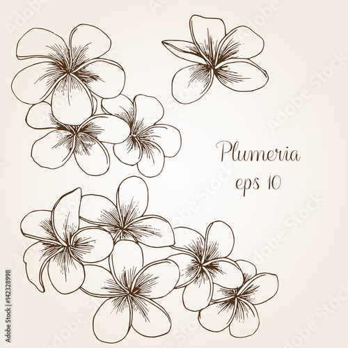 Hand drawn plumeria
