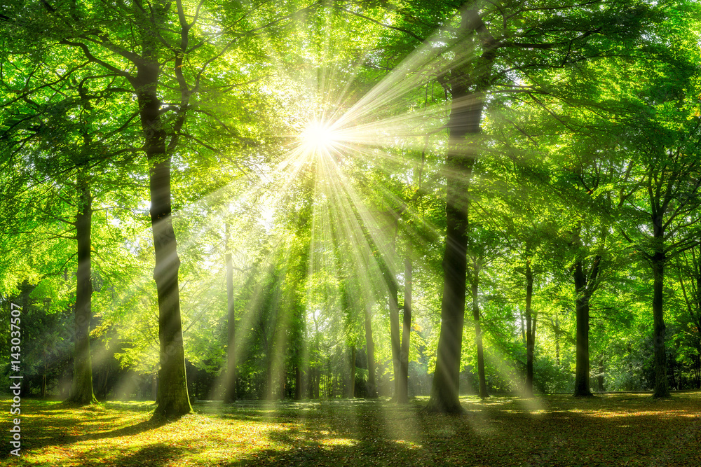 Zielony las w lecie <span>plik: #143037507 | autor: eyetronic</span>