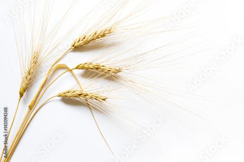 Fotografia Barley ears on white background, close up