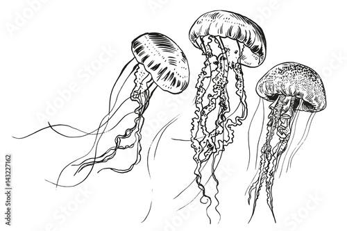 Obraz na płótnie Hand drawn jellyfish. Vector illustration. Sea collection.