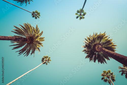Fototapeta Rodeo Drive Beverly Hills Palm Trees