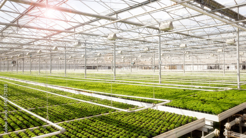 Fotografiet Greenhouse with cultivation