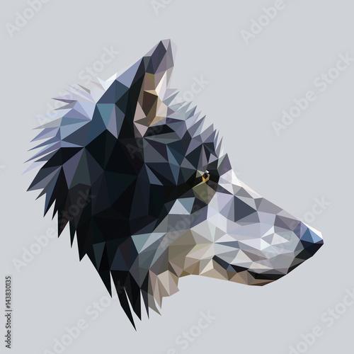 Fototapeta Wolf low poly design. Triangle vector illustration.