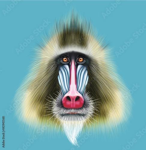 Tela Illustrated portrait of Mandrill monkey