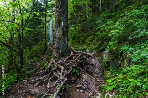 Vászonkép The Appalachian Trail