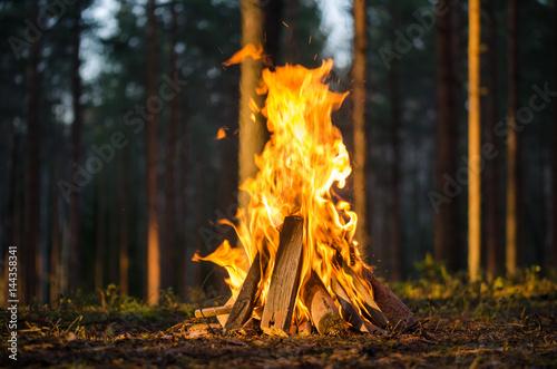 Fotografia Bonfire in the forest