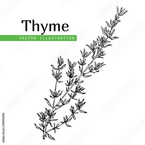 Fotografie, Obraz thyme plant on white