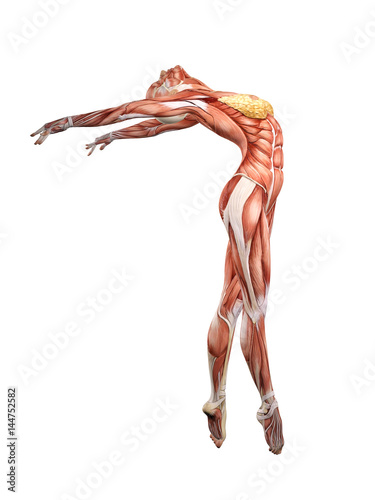 Canvas Print Female muscle anatomy dancing 3D Illustration