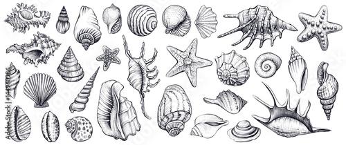 Fotografering Seashells vector set. Hand drawn illustrations.