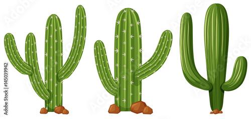 Fototapeta Different shapes of cactus