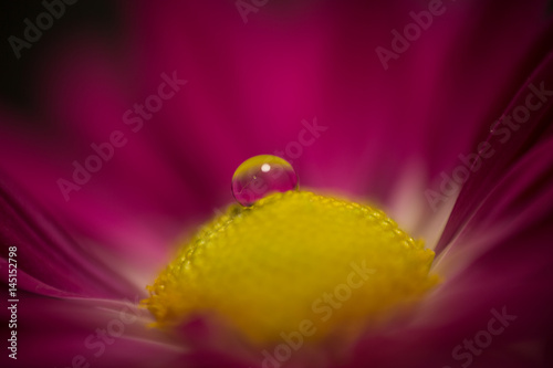 Drops on a flower