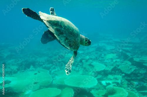 Carta da parati sea turtle maledives