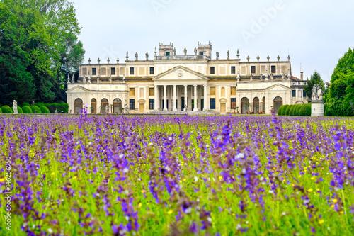 Photo Villa Pisani purple flowers meadow Venice province Riviera del Brenta area -  Ve
