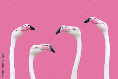 an flamingo head