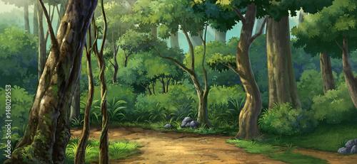 Poranne światło w lesie