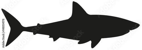 Fototapeta premium sylwetka rekina