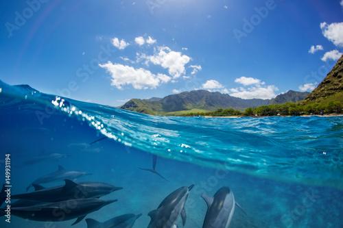 Cuadros en Lienzo Pod of dolphins traveling along shoreline in blue ocean water