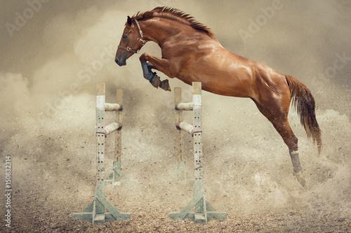 koń skaczący przez przeszkodę