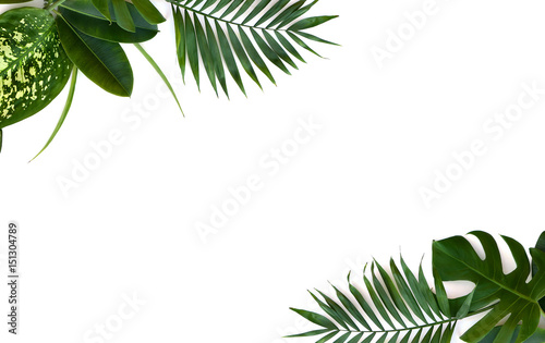 Frame of tropical leaves (Monstera, Dieffenbachia, branch palm, Ficus benjamina) on a white background with space for text. Top view, flat lay