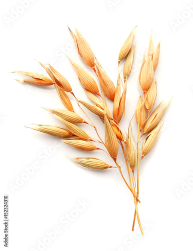 Oat plant isolated.