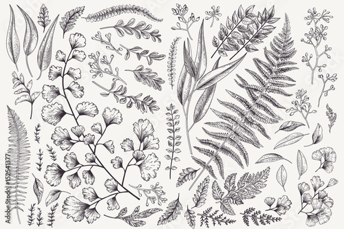 Tablou Canvas Set with leaves and ferns.