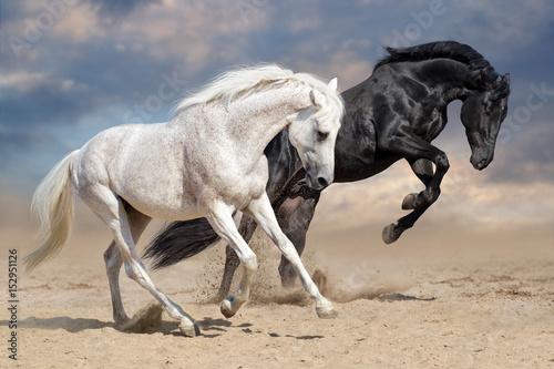 Black and white horses run in desert dust