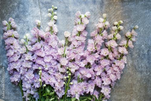 Vászonkép Varietal lilac delphinium. Top view