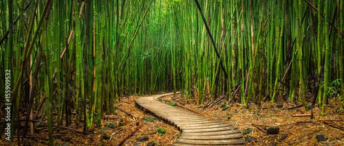 Fotografia Bamboo Forest