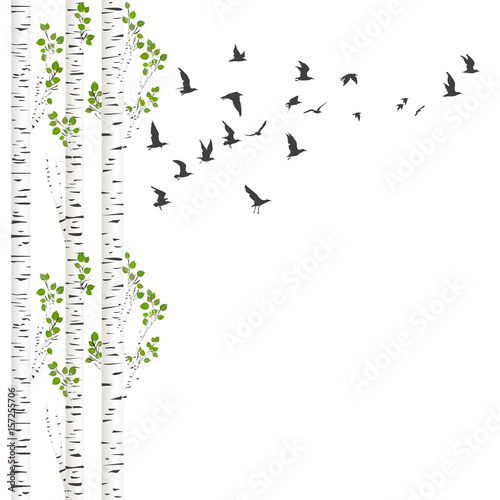 Canvas Print Background with birch trees and birds