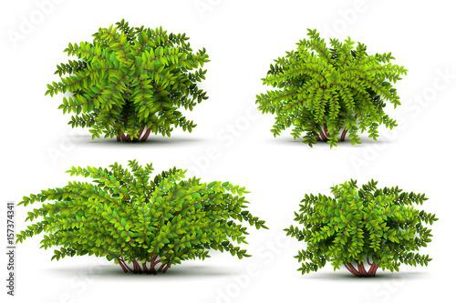 Slika na platnu Shrubbery, 3d isometric bushes isolated on white vector set