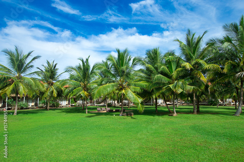 Garden with coconut palm trees