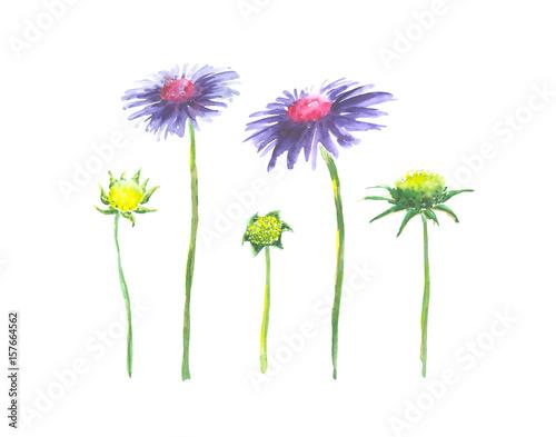 Jasny Akwarelowy Kwiat Z Izolowanymi Liściami Na Białym Tle