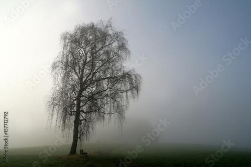 bank unter alter birke im nebel