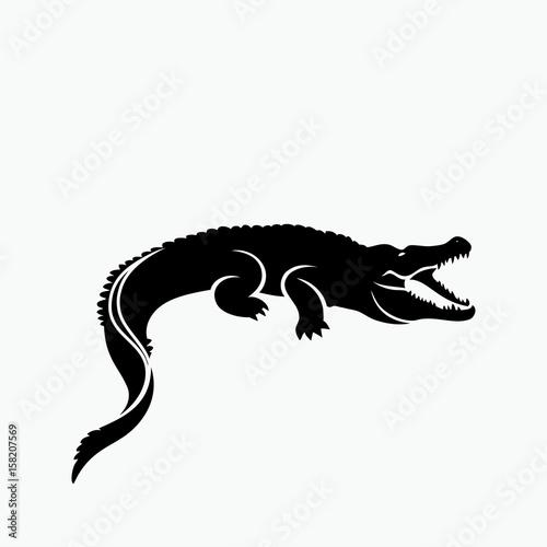Fototapeta premium Aligator