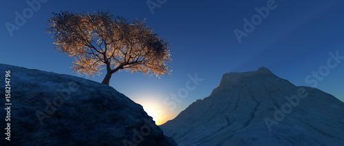 Fotografia almond trees