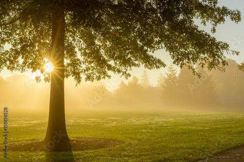 Foggy sunrise with tree фототапет