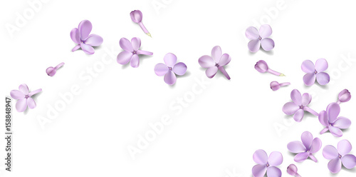 Pastel background with lilac flowers.