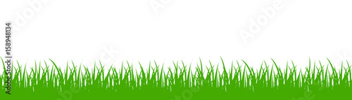 Obraz na plátně Green grass on white background - vector
