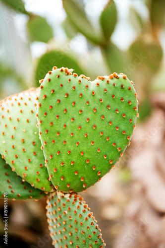 Cactus Family, barrel cactus, close-up barrel cactus