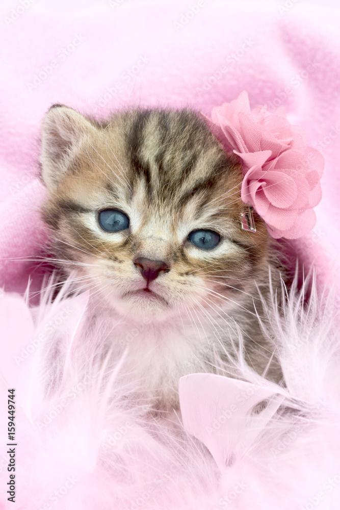 Katzenbaby <span>plik: #159449744   autor: Claudia Paulussen</span>