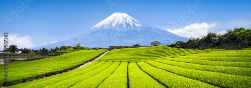 Fototapeta premium Góra Fuji i pola herbaciane w Japonii