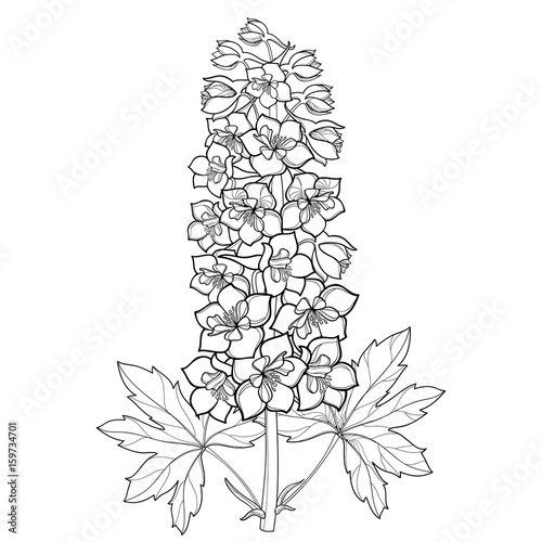 Canvas Print Vector bunch with Delphinium or Larkspur