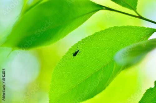 Owad na zielonym liściu