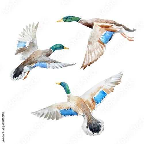Carta da parati Vector set with watercolor ducks