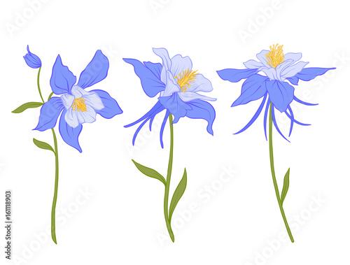 Foto Columbine, aquilegia, flowers