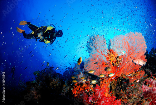 Wallpaper Mural A scuba diver with amazing sea fan in the magnificent underwater world