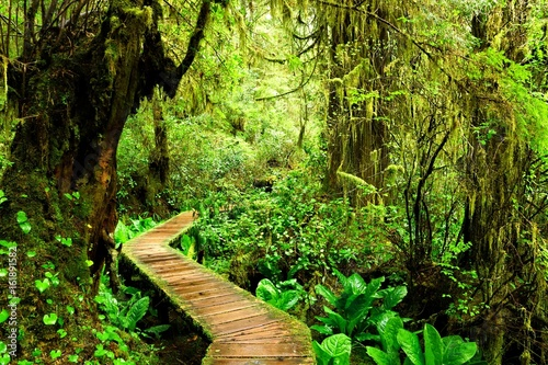Canvas Print Boardwalk trail through the mossy rainforests of Pacific Rim National Park, Vanc